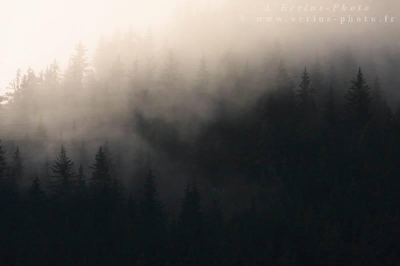 Brume sur les forêts de l'Oisans